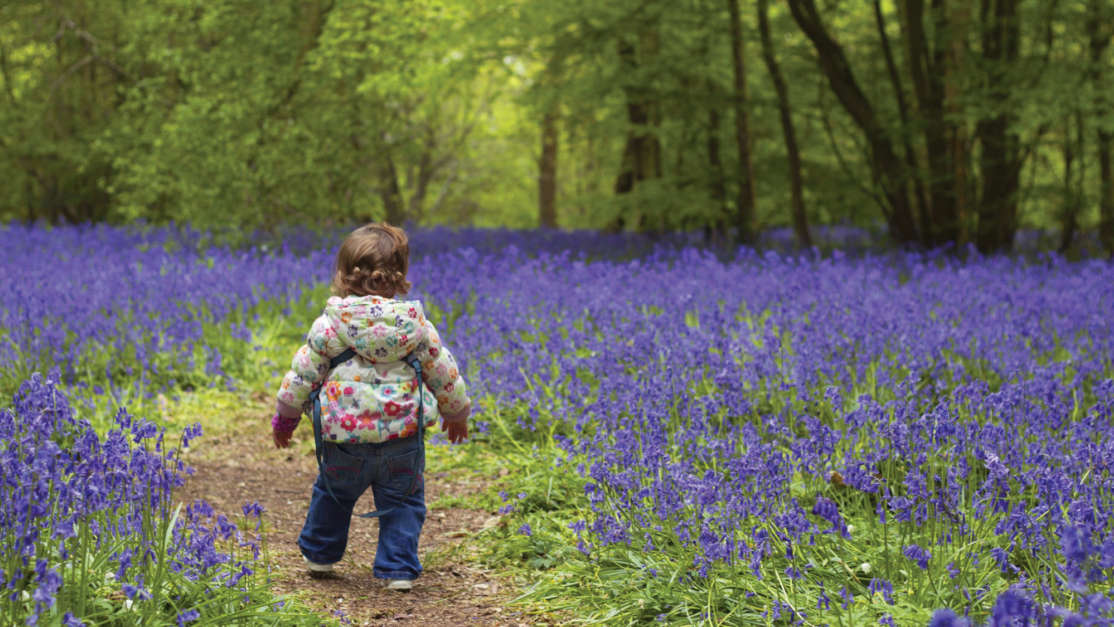 Toddler-in-bluebells-best-places