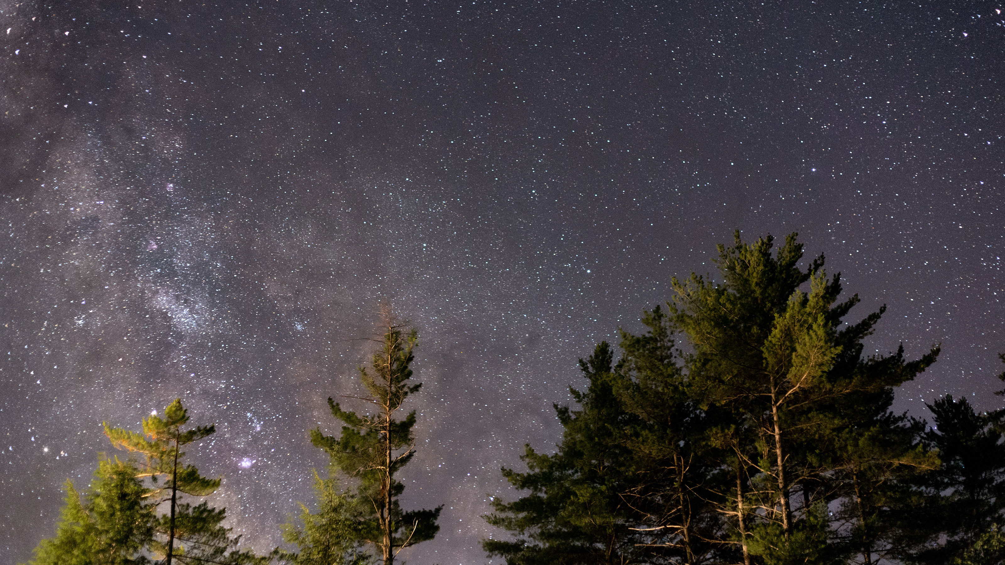 The-milky-way-at-night-over-pine-trees