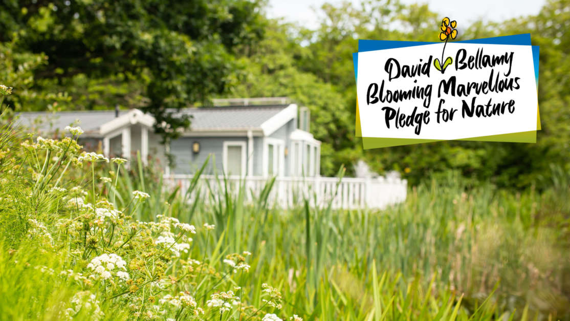 David Bellamy blooming marvellous pledge for nature shorefield holidays