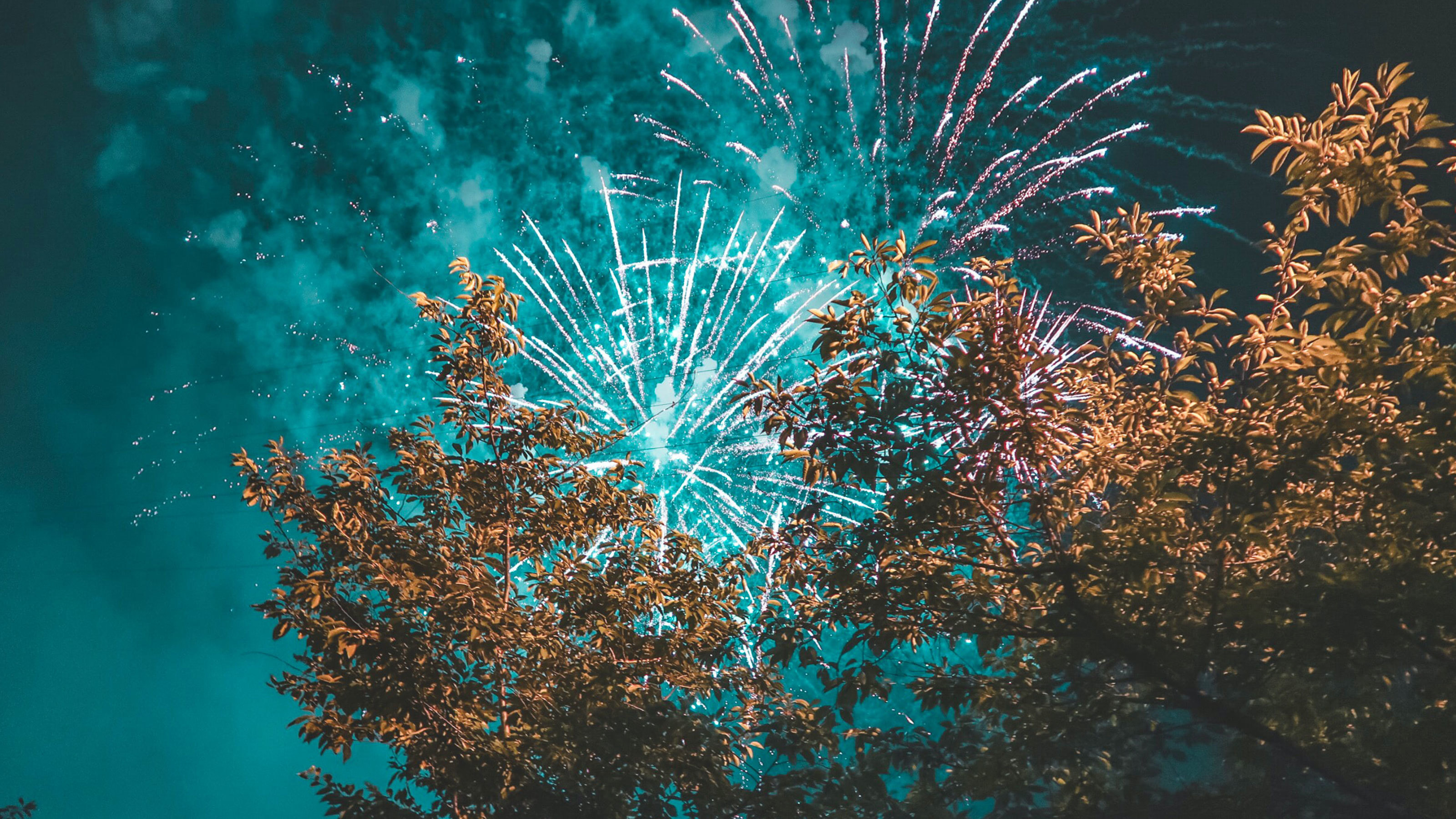 Fireworks over tree canopy