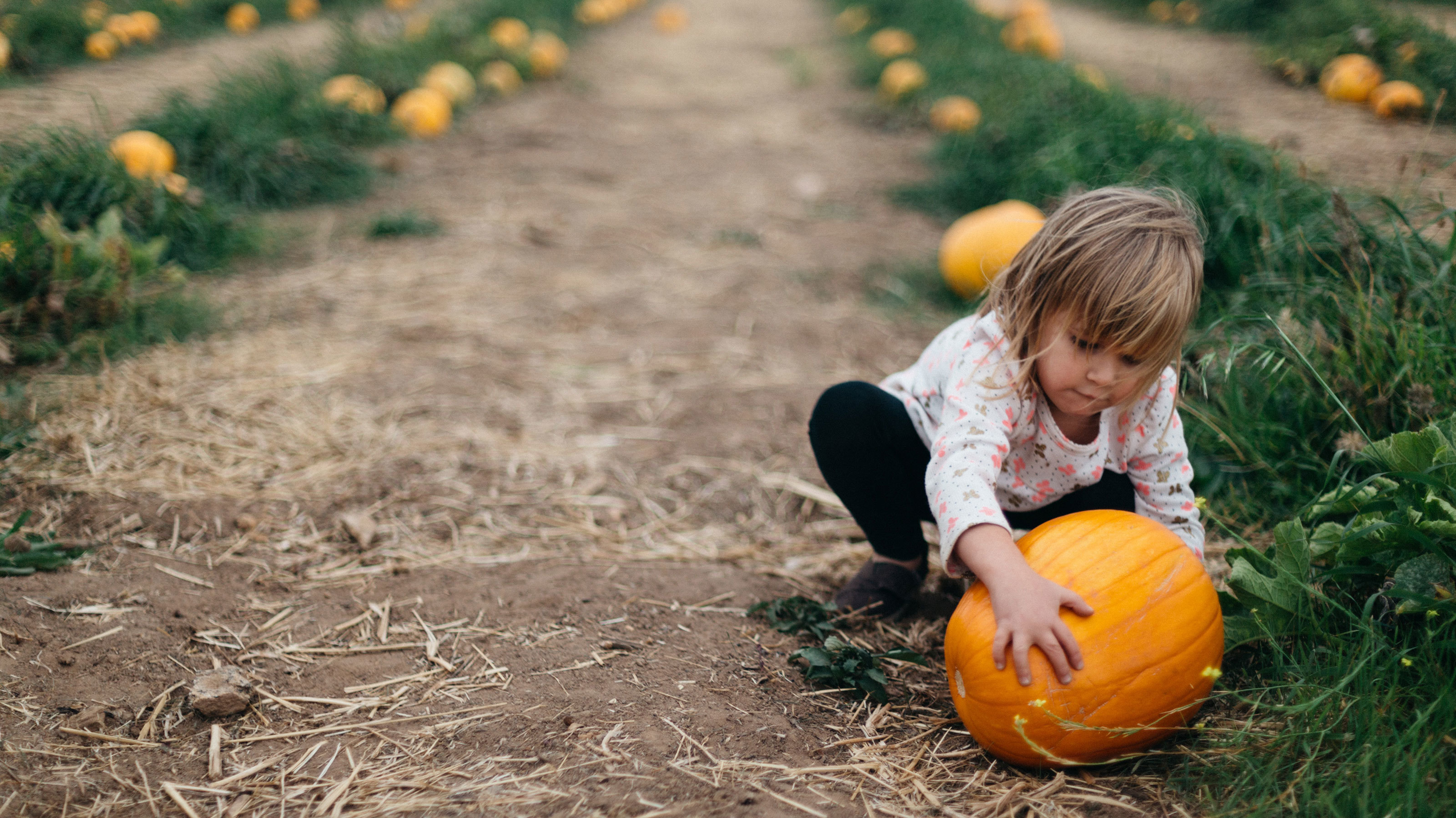 Young-girl-selecting-a-pumpkin-at-a-pick-your-own-farm