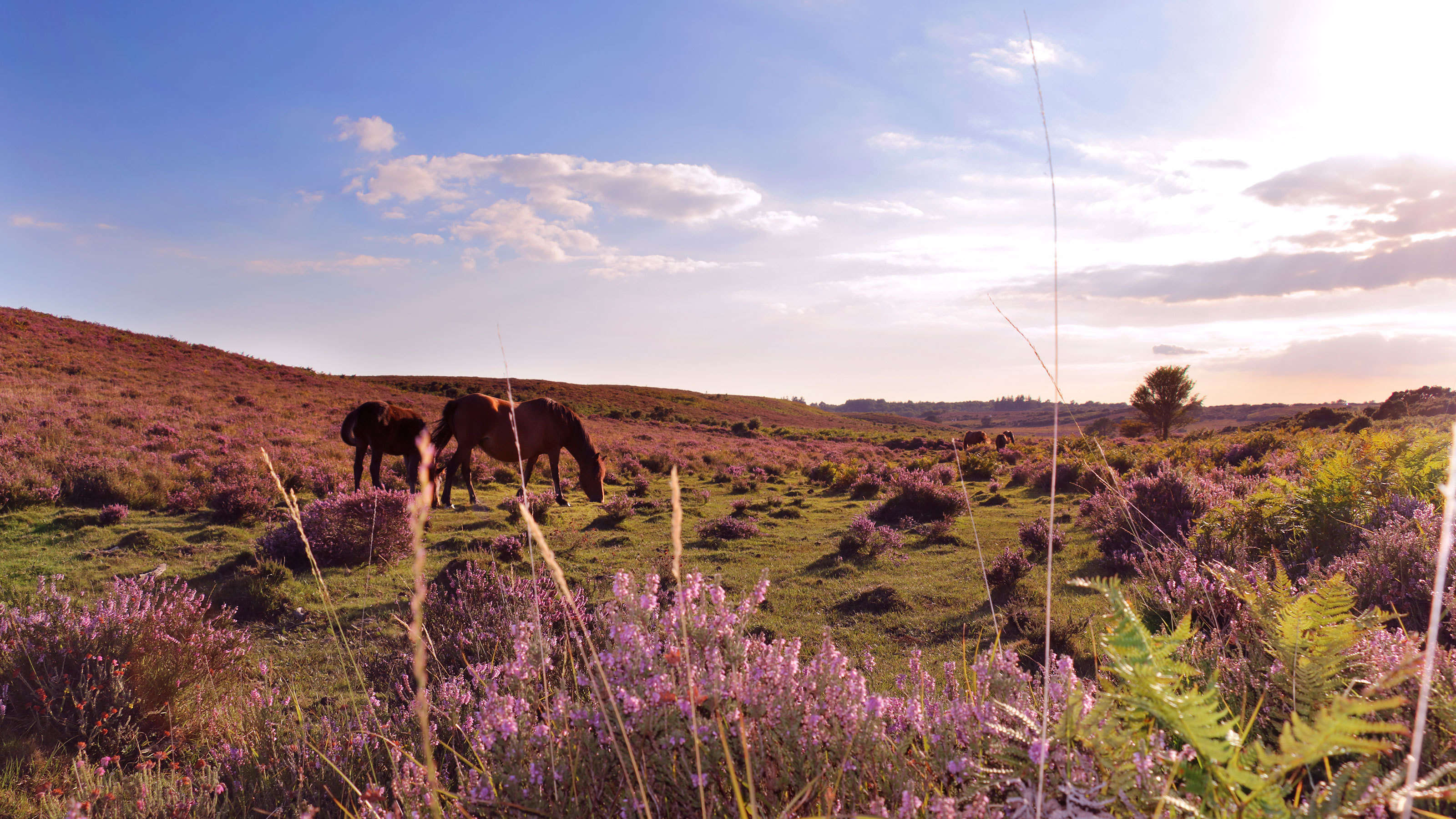 Open spaces of the New Forest National Park