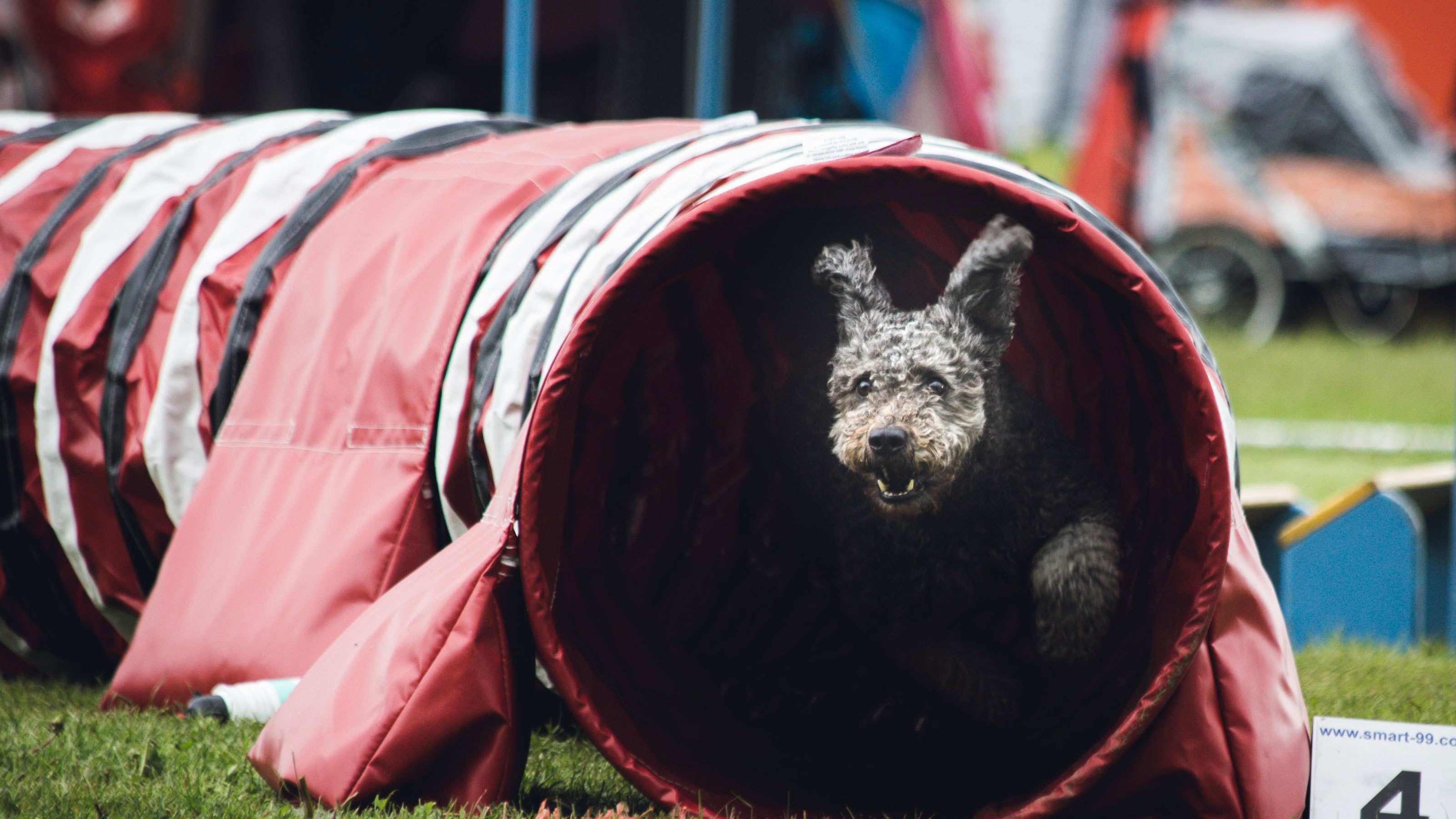 Dog-agility-tunnel