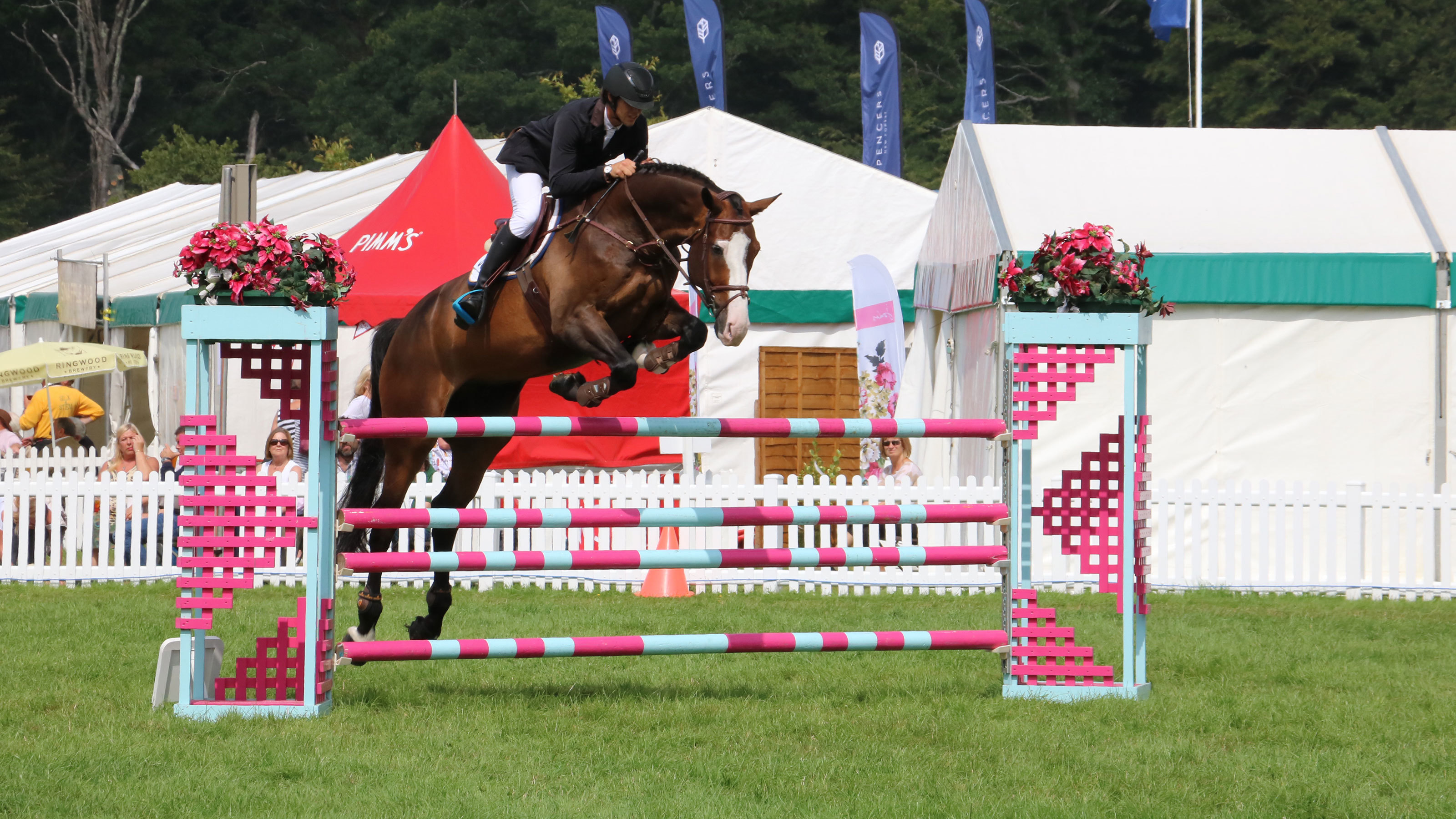 Brown-horse-jumping-at-the-New-Forest-and-Hampshire-County-Show