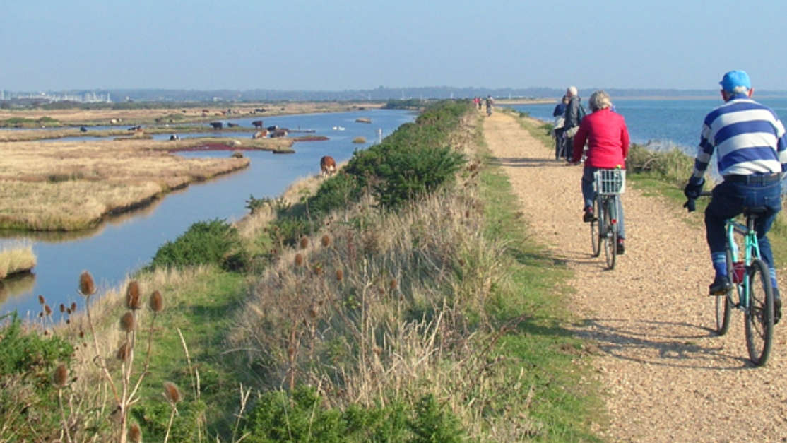 The Best New Forest Cycle Routes 01