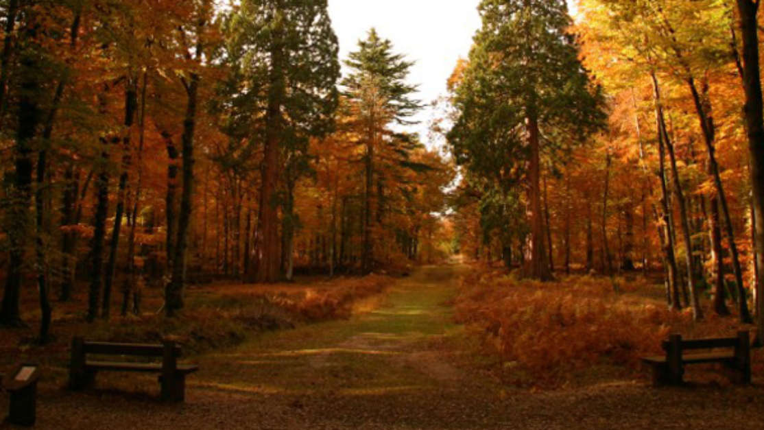 Top 5 Things To Do In Autumn 01
