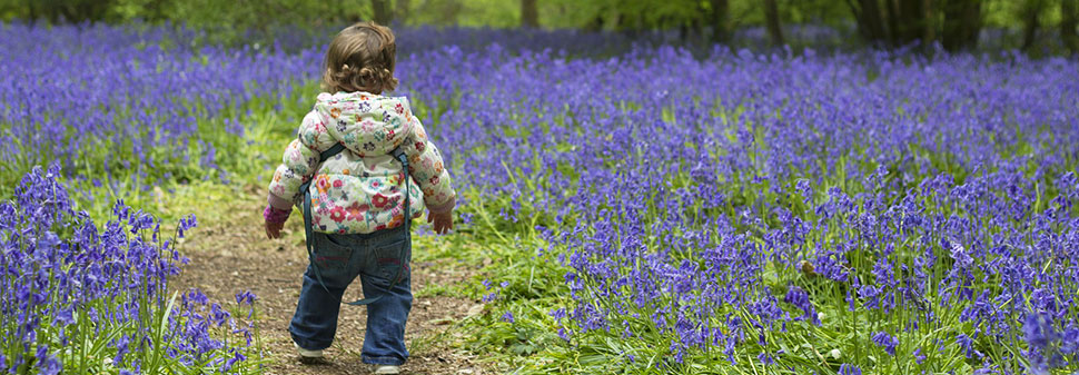 Child walking in bluebell woods