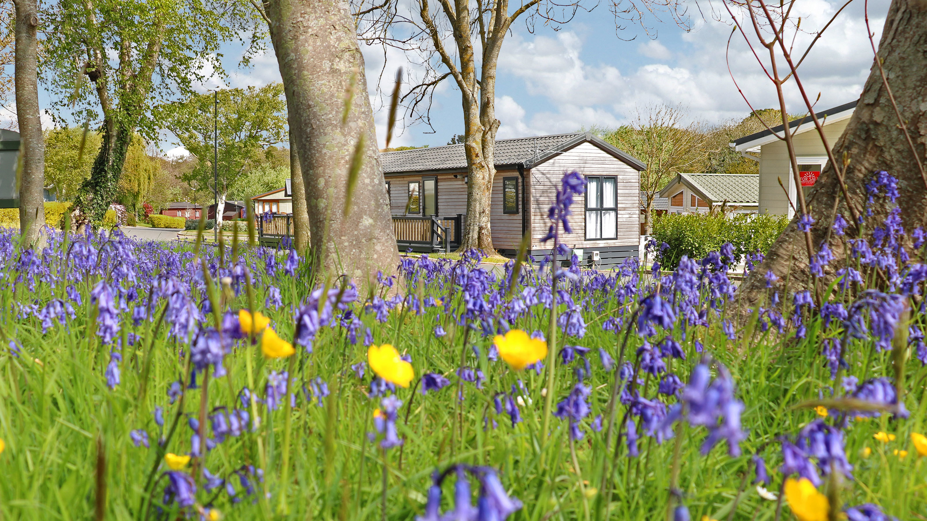 Bluebells-shorefield-country-park-spring