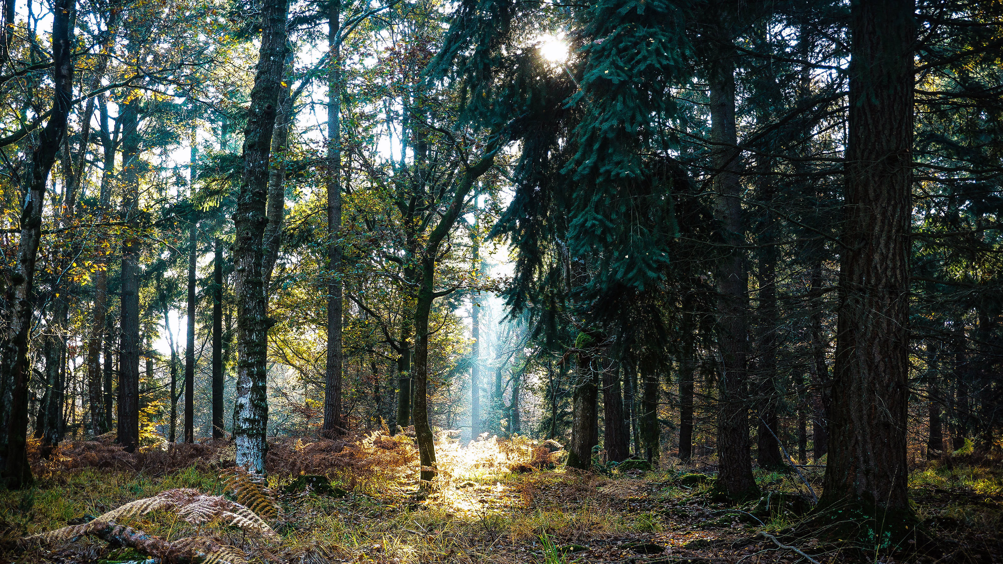 Scenic-New-Forest-with-ray-of-sunshine