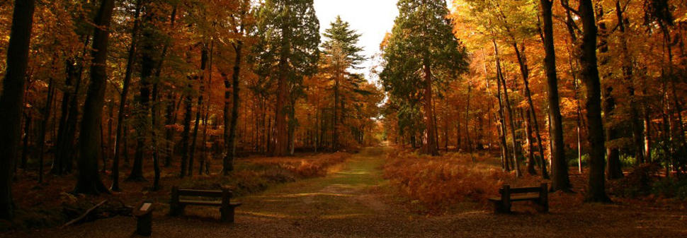 Autumn trees in the new forest