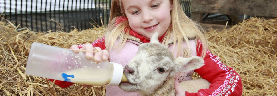 Girl feeding goat with a bottle