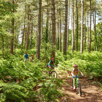 Family Cycling Through Hurn Forest At Oakdene