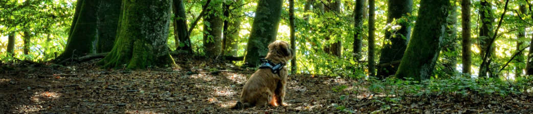 Cute Dog In Forest