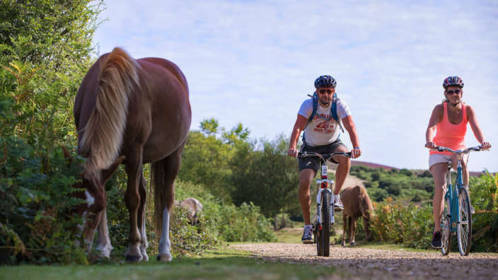 Couple Cycle Past A Pony In The New Forest