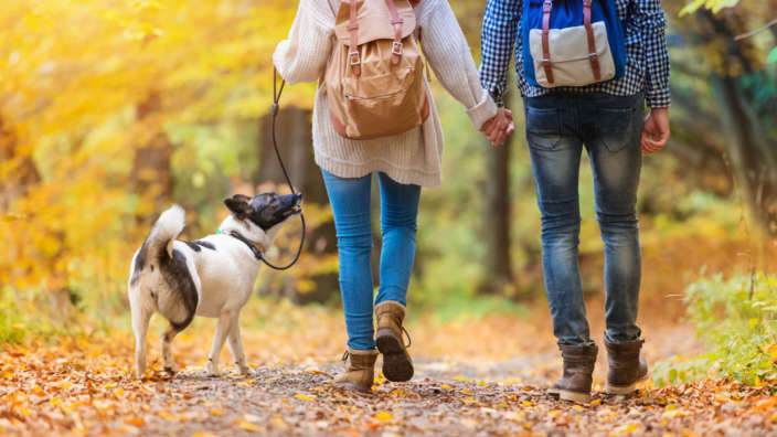 Couple-holding-hands-and-walking-dog-through-autumn-leaves