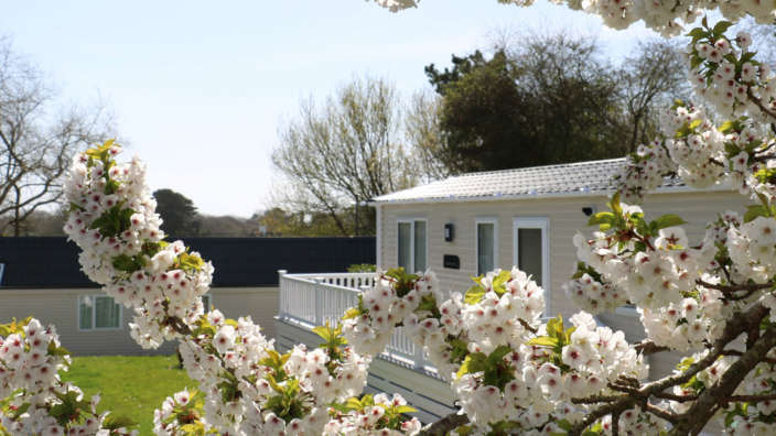 Caravan-accommodation-surrounded-by-spring-cherry-blossom
