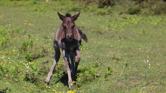 Newborn-foal-in-the-New-Forest