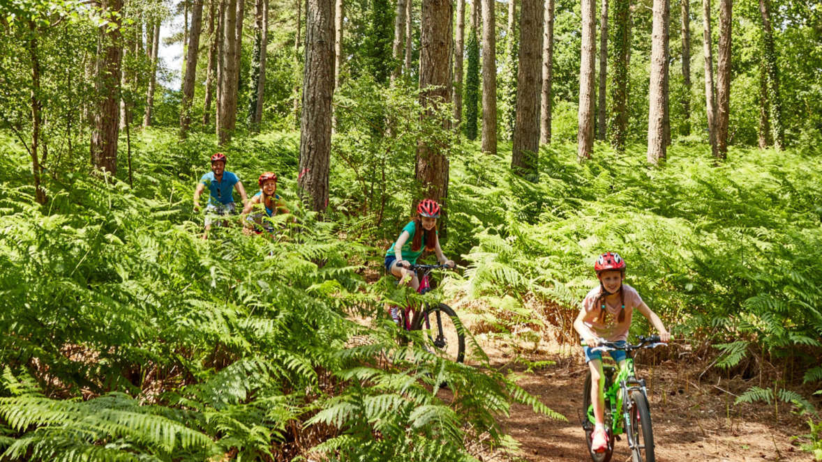 Family cycling through Hurn Forest