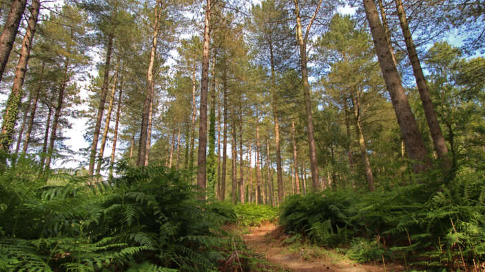 Woodland Hurn Forest