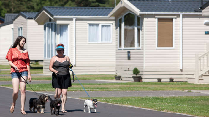 Couple Walking Dogs Park