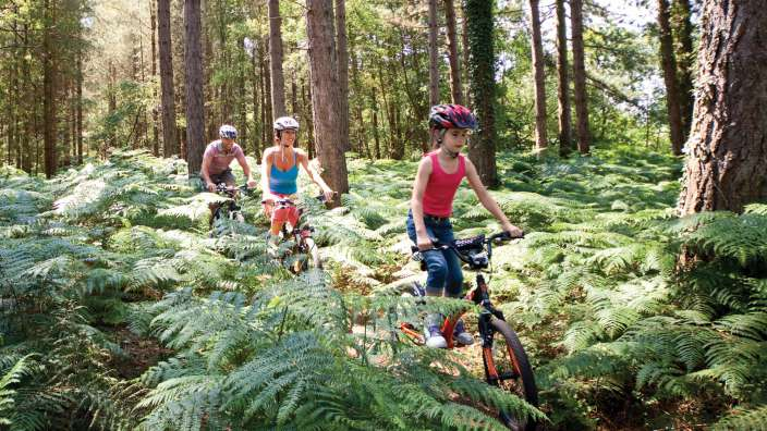 Family Cycling Forest Track