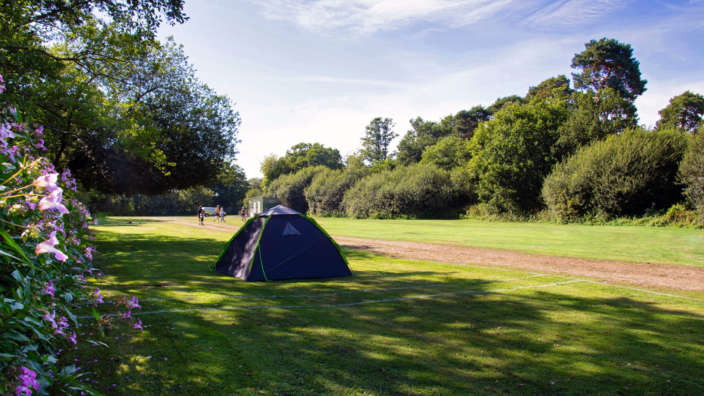 Grass camping pitches at Oakdene Forest Park