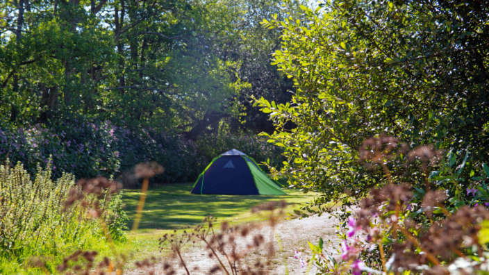 The Meadow camping at Oakdene Forest Park in Dorset