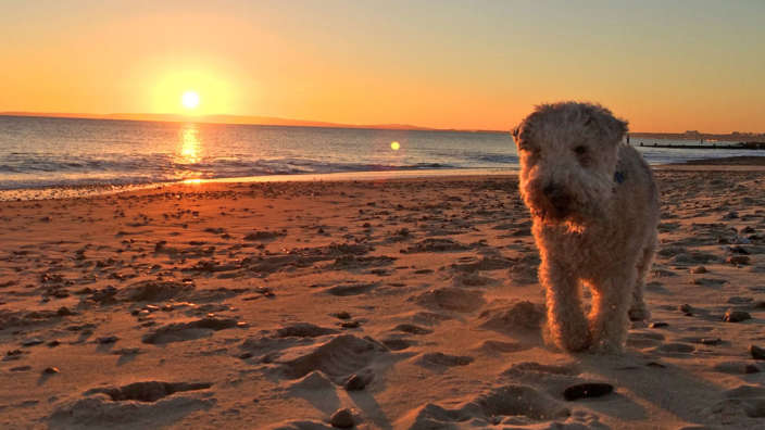 Dog On Sandy Beach At Suset