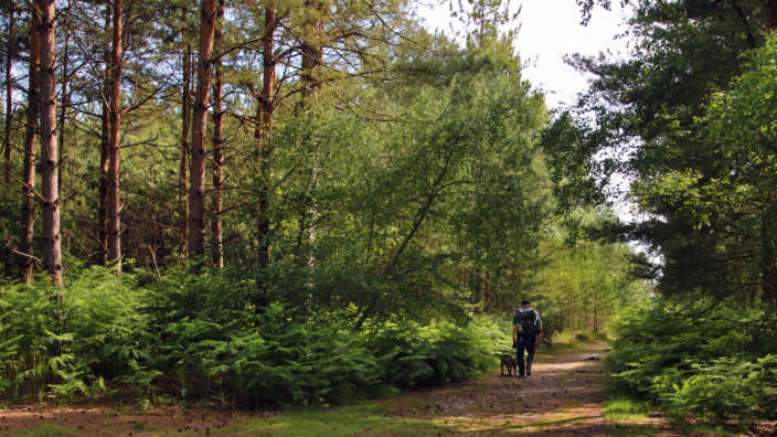 2 Dog Friendly Forest Walk Through Hurn Forest