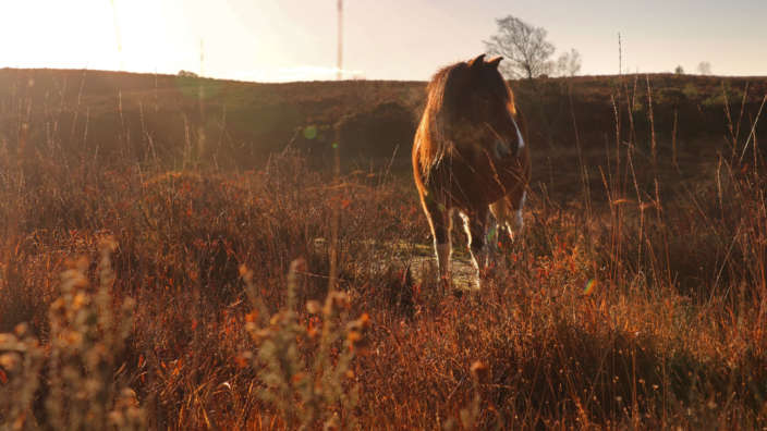 Explore The New Forest From Your Holiday Home