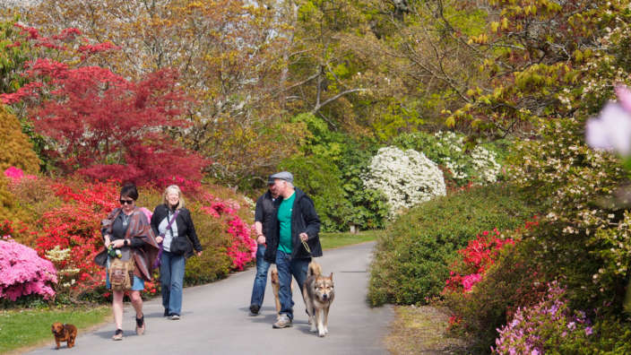 Walking Dogs At Exbury Gardens Dog Friendly Attraction