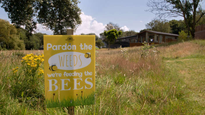 Leaving grass uncut for bees and pollinators