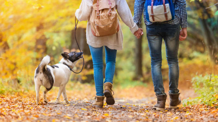 Couple-Dog-Forest-Autumn-Leaves